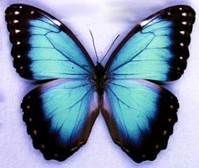La mimética de las mariposas no significa evolución, sino