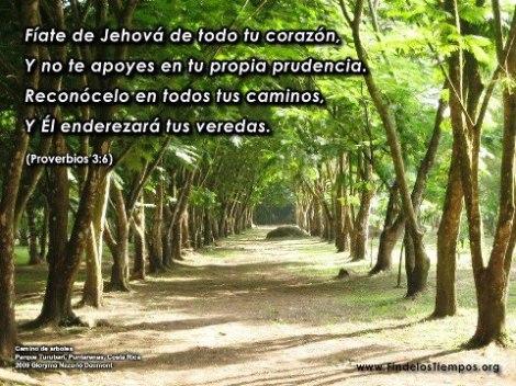Confia siempre en Jehová y no te apoyes en tu propia prudencia