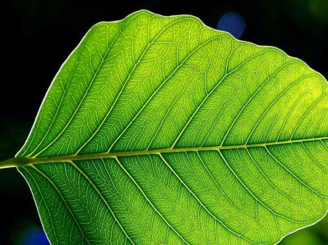82379-leaf_1_web