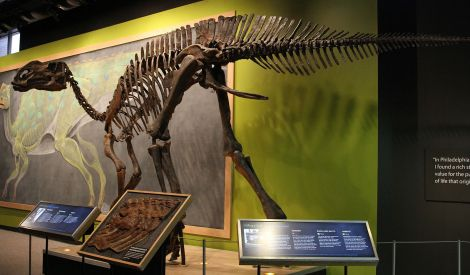 c5255-hadrosaurus_reconstruction